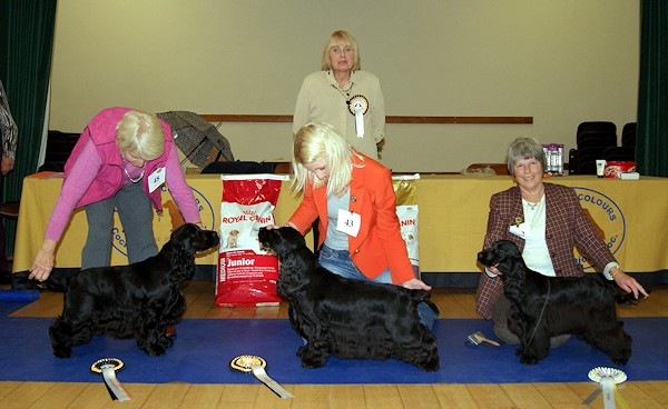 Best In Show Nov 2012